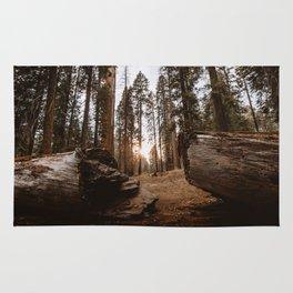 Light Between Fallen Sequoias Rug