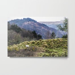 Travel to Ireland: Sheep Hill Metal Print
