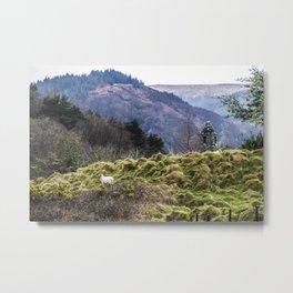 Travel to Ireland: Sheep Hill Metal Print
