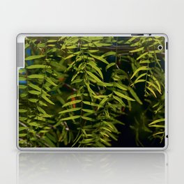 Emerald veil Laptop & iPad Skin