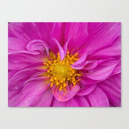 Vibrant Pink Chrysanthemum Flower Canvas Print