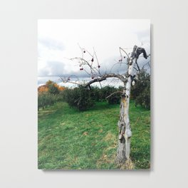 Old Apple Metal Print