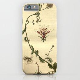 Flower 2693 lobelia corymbosa Corymbose African Lobelia10 iPhone Case