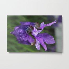 Iris so pretty Metal Print