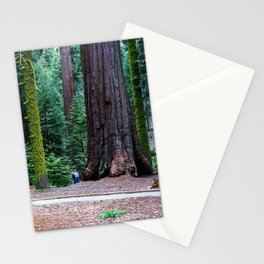 Sequoia Trees, McKinley Grove, California Stationery Cards