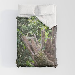 A cyclone damaged tree in the rain forest Comforters