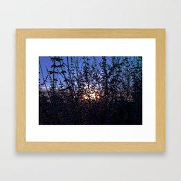 Denver Daze Framed Art Print