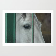 Horse....of course Art Print