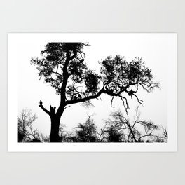 African White-backed Vultures Art Print
