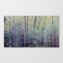 Spring Forest Trees3 Canvas Print
