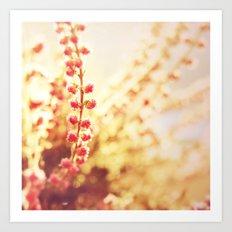 Sweet Heather Nature Photography Art Print