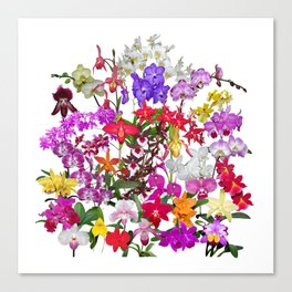 A celebration of orchids Canvas Print