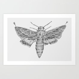 Moth Art Print