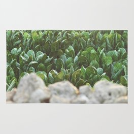 Nature photography, home furnishings, fine art, kitchen wall decor, South Italy, Sicily, Apulia, Rug