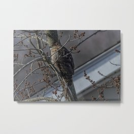 Right outside my Window! Metal Print