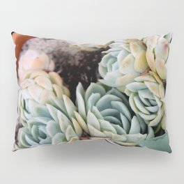 California Potted Succulents Pillow Sham