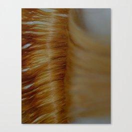 The Shine Illusion Canvas Print