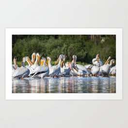 American White Pelicans Grooming at Shadow Mountain Lake in Grand Lake, Colorado Art Print