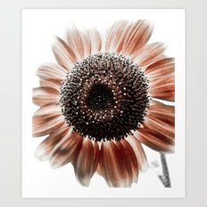 Red Sunflower Head Art Print