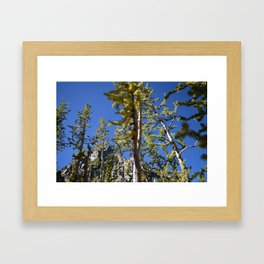 Golden Larches - The Enchantments, Washington State Framed Art Print