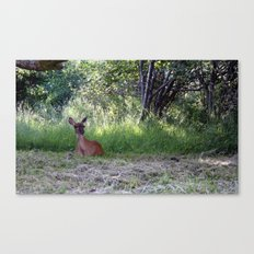 Do you want something? Canvas Print