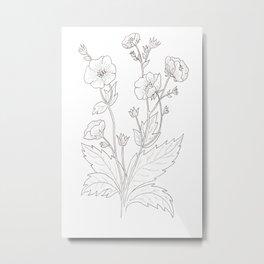 potentilla hopwoodiana Metal Print
