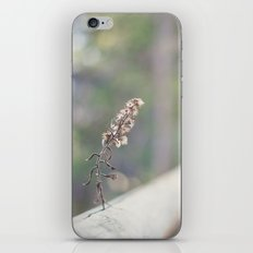 Coquette fence iPhone & iPod Skin