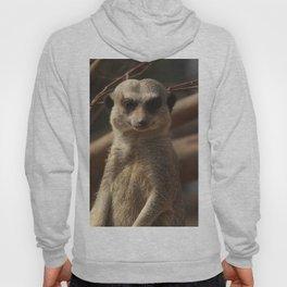Meercat Donegal Hoody