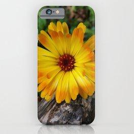 marigold on log iPhone Case
