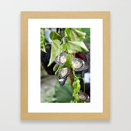 Penang Butterfly Farm Framed Art Print