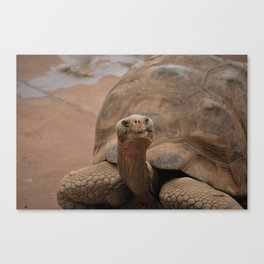Galapagos Turtle Canvas Print