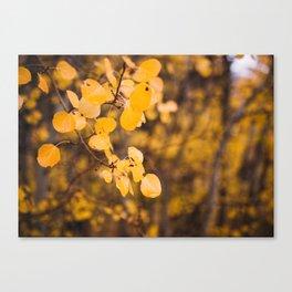 Autumn Leaves - Eastern Sierras Canvas Print