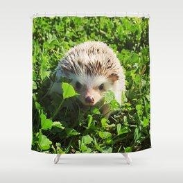 Juni Hedgehog Clovers Shower Curtain