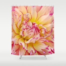 Pink Dahlia with Bright Pink tips Close Up Detail Shower Curtain