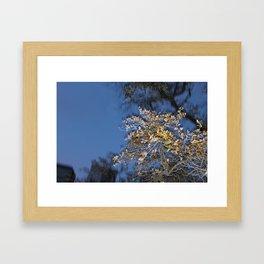 Melting Tree Framed Art Print