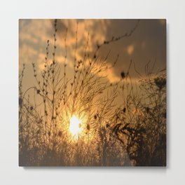 sunset on the lace field Metal Print