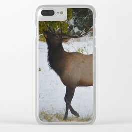 Elk reaches up for the green leaves in an early September snowfall, Jasper National Park Clear iPhone Case