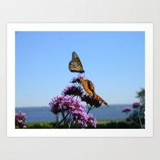 velvet butterflies Art Print