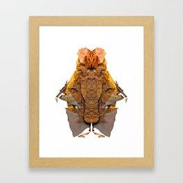 Balthazar- Framed Art Print