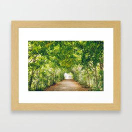in green summer light Framed Art Print
