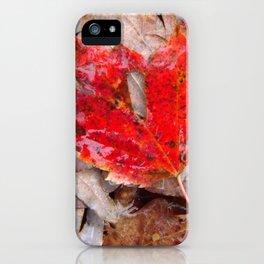 autumnal reverie 657 iPhone Case