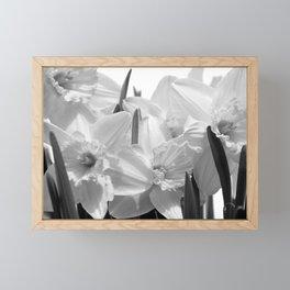 Daffodils BW Framed Mini Art Print
