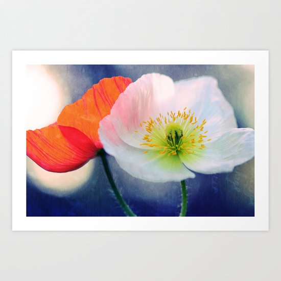 Evening Poppies Art Print