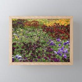 Pansy Garden Framed Mini Art Print