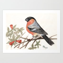Eurasian bullfinch bird Art Print