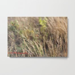 dragonfly in the grass Metal Print