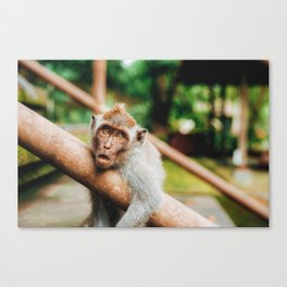 Cute Monkey (Color) Canvas Print