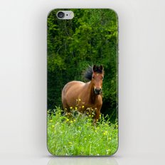 Horse in a pature iPhone & iPod Skin