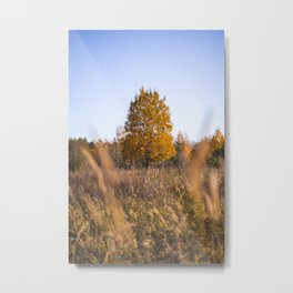 Lonely Instagram Tree. || Standing Solo. || Autumn Mood. || Orange Nature. || Latvia. Metal Print