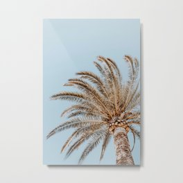 a palm tree xii Metal Print